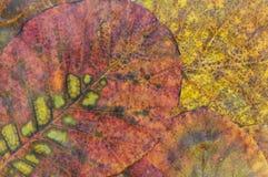 liść więdnący Obrazy Royalty Free