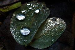 liść woda opadowa woda Obrazy Royalty Free