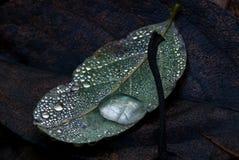 liść woda opadowa woda Obraz Stock