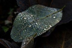 liść woda opadowa woda Fotografia Stock