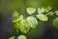 liść wzrastali Obraz Stock