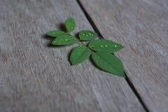 liść wzrastali Fotografia Royalty Free
