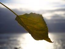 Liść z morzem behind Zdjęcie Royalty Free