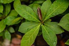 liść załzawiony zdjęcia stock