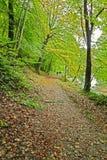 Liść zakrywająca ścieżka w wczesnej jesieni Zdjęcie Stock