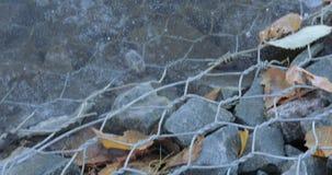 Liść zakrywający z hoarfrost i stawem zdjęcie wideo