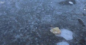 Liść zakrywający z hoarfrost i stawem zbiory wideo