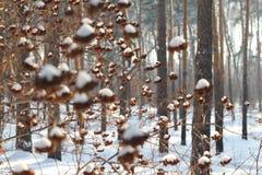 Liść Zbiera śnieg Podczas zimy burzy zdjęcia stock