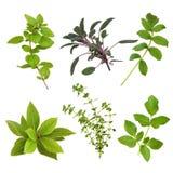 liść zielarski wybór Obrazy Stock