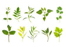 liść zielarski wybór Zdjęcia Royalty Free