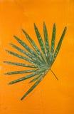 Liść zieleni ściana zdjęcie royalty free