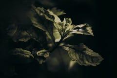 liść zielona roślina Zdjęcia Royalty Free