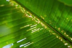 liść zielona roślina fotografia royalty free