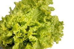 liść zielona sałata obraz stock