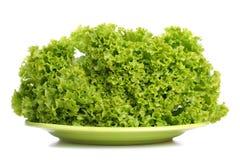 liść zielona sałata Zdjęcie Royalty Free