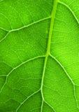 liść zielona struktura Obraz Royalty Free