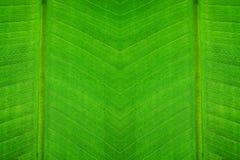 liść zielona tekstura Fotografia Stock