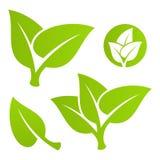 liść zielony set Zdjęcie Stock