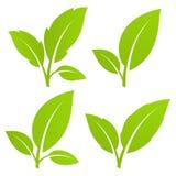 liść zielony set Zdjęcia Stock
