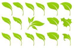 liść zielony set Fotografia Stock