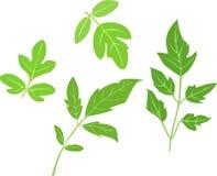 liść zielony set Zdjęcia Royalty Free