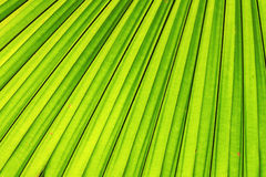 Liść zielony tło Zdjęcie Stock