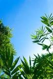 Liść zielony tło Zdjęcia Stock