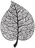 Liścia kośca sylwetka Obrazy Royalty Free