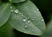 liść zrzutu wody Zdjęcia Royalty Free