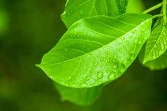 liść zrzutu wody Zdjęcia Stock