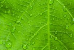 liść zrzutu wody Obrazy Royalty Free