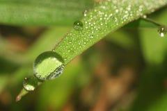 liść zrzutu wody Obrazy Stock