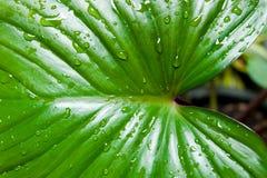 liść zrzutu wody Fotografia Stock