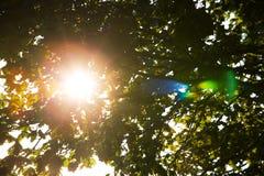 liści świecić Zdjęcia Stock