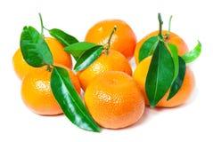 Liści clementines fotografia stock