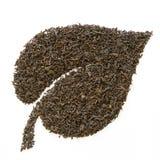 liści herbaty. zdjęcie royalty free