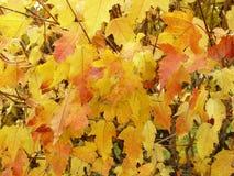liści jesienią Zdjęcie Stock