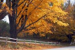 liści jesienią Obrazy Royalty Free