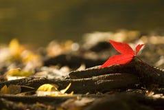 liści jesienią Fotografia Royalty Free
