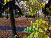 liści jesienią park Obrazy Royalty Free
