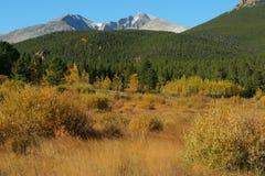 liści jesienią szczyt jest długi obraz royalty free