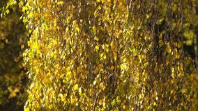 liści jesienny wiatr zdjęcie wideo