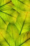 liści tła Zdjęcia Royalty Free