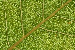 liści tła konsystencja zdjęcie stock