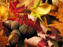 liści tła orzechy Zdjęcia Stock