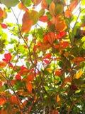Liścia colour folujący Jesieni Colour Fotografia Stock