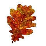 Liścia dąb Obraz Royalty Free