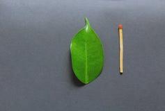 Liścia i dopasowania kij Pojęcie tworzenie i zniszczenie fotografia stock