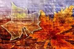 Liścia klonowego grunge tło Zdjęcie Stock