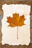 Liścia klonowego herbarium Zdjęcie Stock